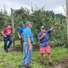 Tom Clark, Ben Clark, Duane Greene and Jon Clements examine tall spindle apple trees