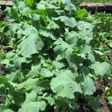 Thorny leaves II