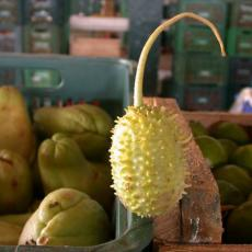 Maxixe, (ma-shee-shee) a vegetable popular in Brazil. Photo courtesy of WorldCrops.Org.