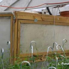 Banker Plants – Starter cage