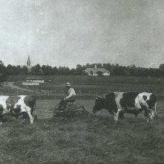 Haying on Campus, 1918