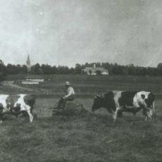 Haying on Campus, 1918