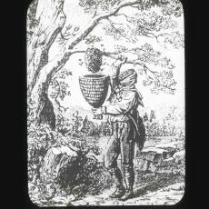 """Taking a Swarm"" antique glass lantern slide"