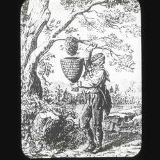 """Taking a Swarm"" antique glass lantern slide"