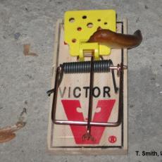 This is no way to trap a slug