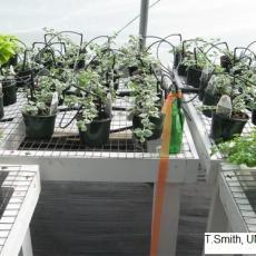 Bottle as water gauge in greenhouse