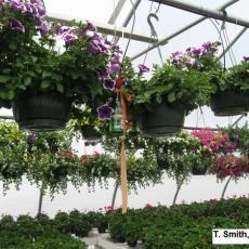 water gauge hanging in greenhouse