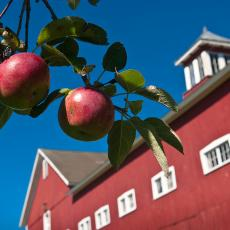 Barn at Cold Spring Orchards