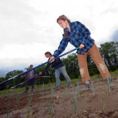 Students hoeing at South Deerfield Crop Animal Research and Education Center
