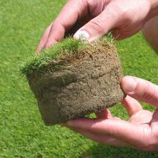 A researcher examines a cup cutter plug on a bentgrass plot at the Joseph Troll Turf Research Center.