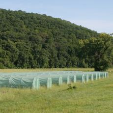 Tents in use for pollinator research by Prof. Lynn Adler at the South Deerfield Crop and Animal Farm, 2018