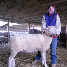 Alice Newth, Livestock Barn Manager, showing proper method of holding sheep