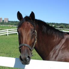 Horse at the Hadley Farm