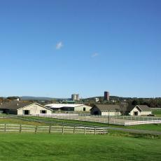 Hadley Farm in the summer