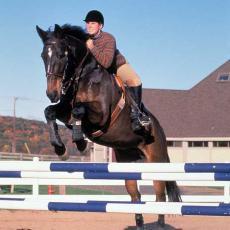 Horse jumping at the Hadley Farm