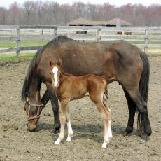 Mare and foal at Hadley Farm