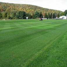 Wide shot of a National Turfgrass Evaluation Program variety trial at the UMass Joseph Troll Turf Research Center.