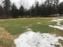 Maine snow mold plot