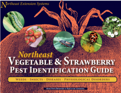 Figure 5. Northeast Vegetable and Strawberry Pest Identification Guide.