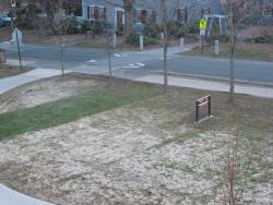 Gray snow mold on a demonstration lawn on the UMass campus, note the strip of fine leaf fescue species which show some resistance to the disease.