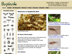 Bug Guide
