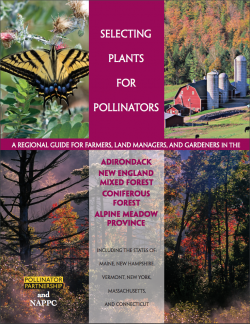 Pollinator Partnership Eastern Broadleaf Forest