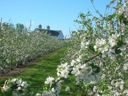 2012 New England Tree Fruit Management Guide