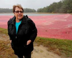 Carolyn Demoranville at cranberry bog