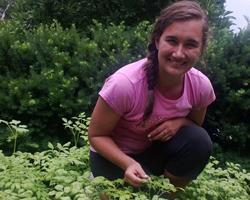 Cassie Sefton, UMass student intern plants urban garden at ALC