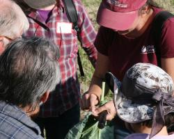 Sue Scheufele, UMass Extension educator, examines leaf scouting for insects