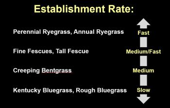 Establishment rates of key cool season grasses