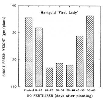 Growth of Marigold