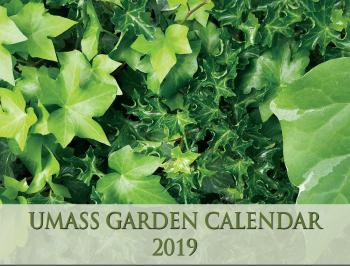 Assorted ivies grace the cover of the 2019 UMass Garden Calendar.