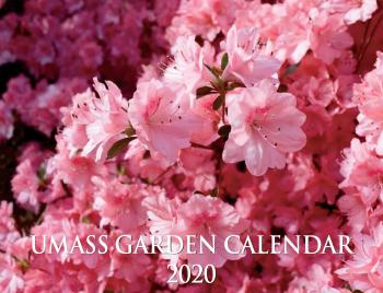 Pink azaleas grace the cover of the 2020 UMass Garden Calendar.