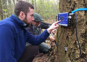 Nick Brazee checks monitor for internal decay of living trees