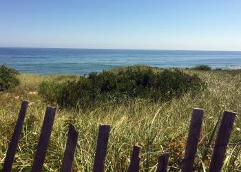Beach grass on Cape Cod. photo: © Shannon Jarbeau