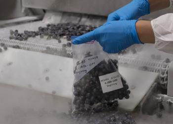 Individually Quick Frozen blueberries