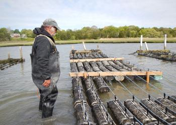 Shellfish aquaculture: an important industry on the Cape