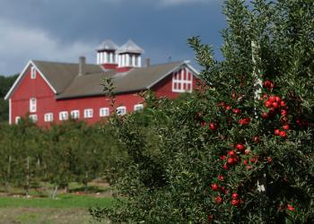 Cold Spring Orchard barn and apples
