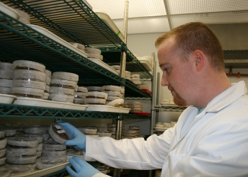 Paul Travers selects plant cell culture dish for research