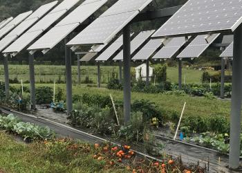 Raised solar panels with vegetable crops underneath