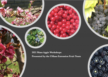 2021 Mass Aggie Fruits