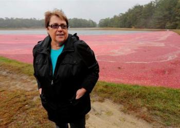 Carolyn Demoranville at cranberry bog