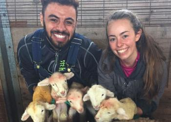 Cris Wein and Amanda Reilly assist with delivery of 5 lambs to 1 ewe at Hadley Farm