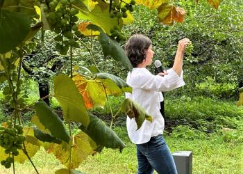 Elsa Petit shares best practices for growing grapes in Massachusetts