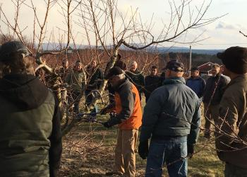Home Orchard Pruning
