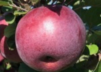 RubyMac 091619
