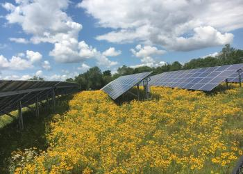 solar PV array with flowers