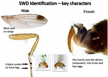 SWD ID (from Oregon State Univ.)