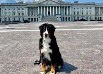 Teddy Brown, K9 First Responder at the US Capitol, trained by 4-H member, Caleigh Brown
